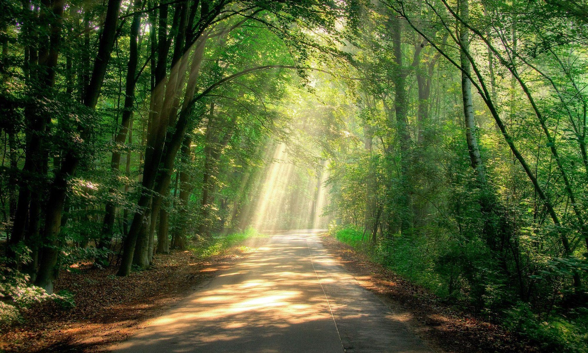ウェルビーイングへの道 ~ The Path to Wellbeing ~
